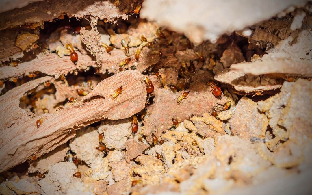 These insects destroy wood so take steps to keep termites out of your house